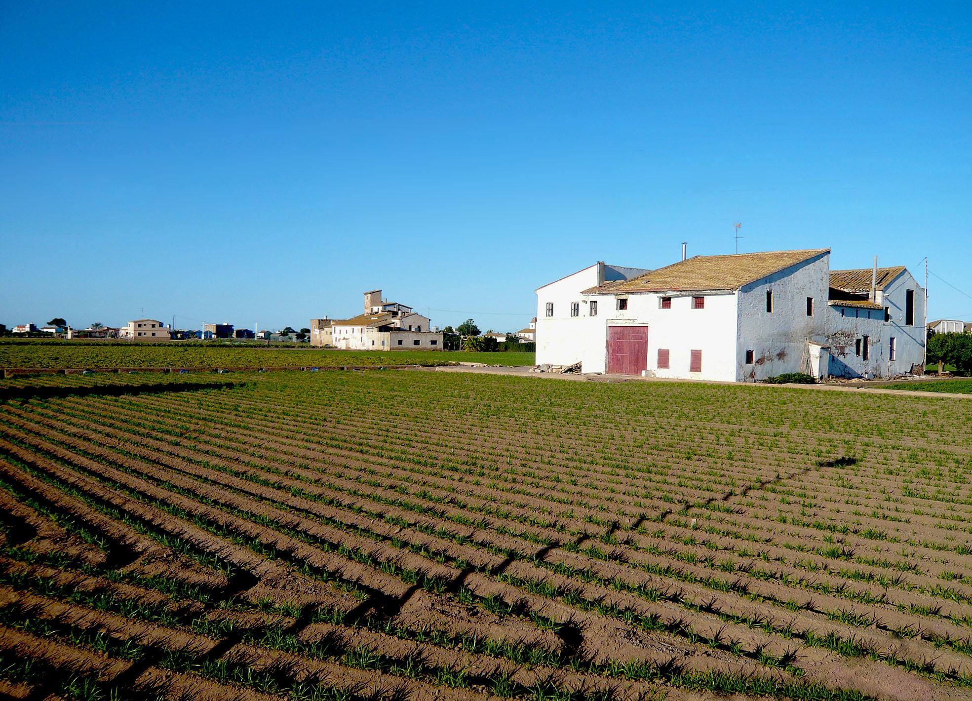 Huertas tradicionales en Alboraia